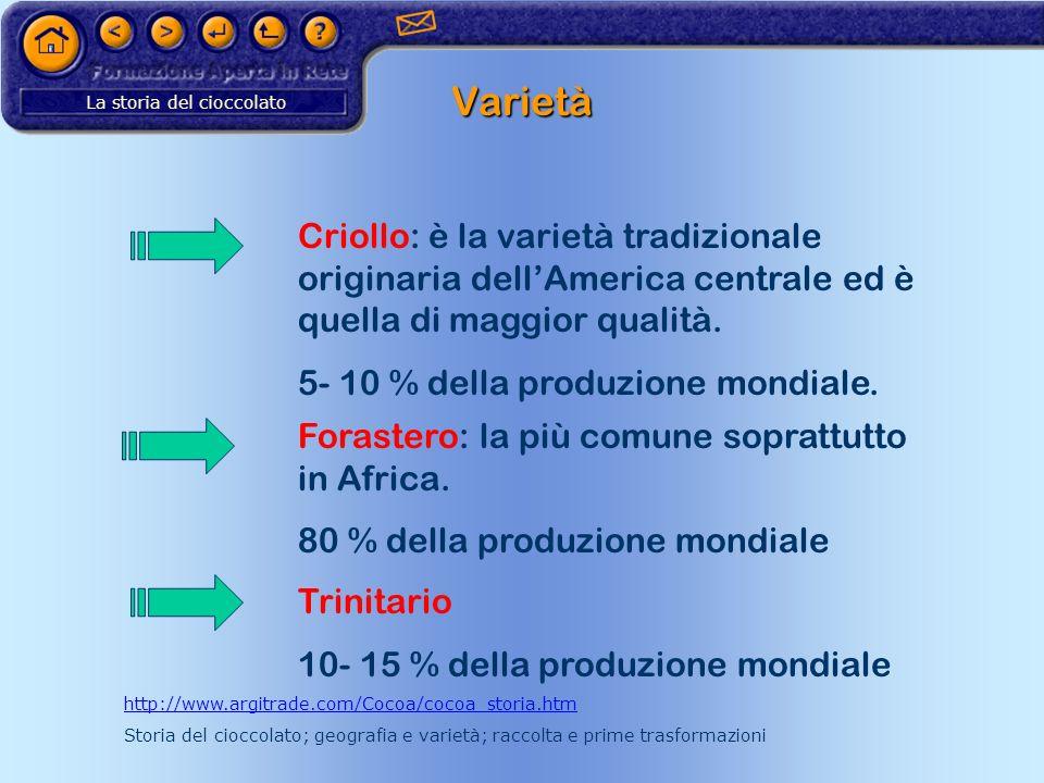 La storia del cioccolato Varietà Criollo: è la varietà tradizionale originaria dellAmerica centrale ed è quella di maggior qualità. 5- 10 % della prod