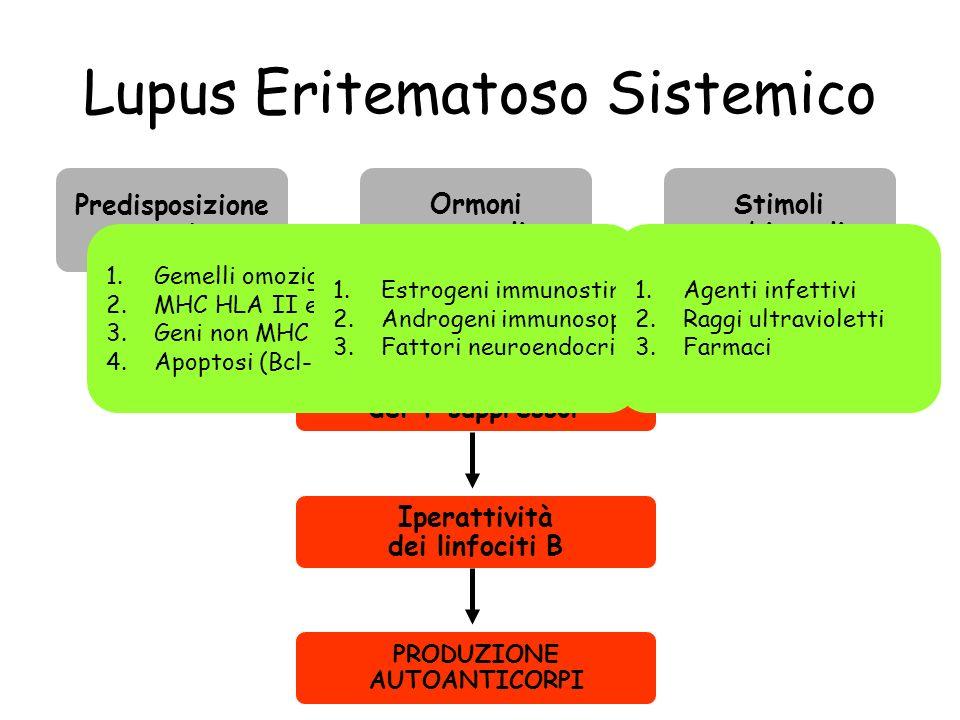 Lupus Eritematoso Sistemico Predisposizione genetica Ormoni sessuali Stimoli ambientali Ridotta funzione dei T suppressor Iperattività dei linfociti B