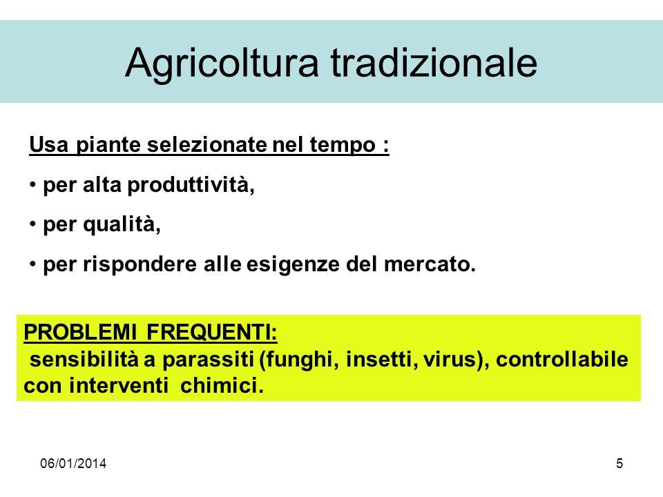 06/01/20145 Agricoltura tradizionale Usa piante selezionate nel tempo : per alta produttività, per qualità, per rispondere alle esigenze del mercato.