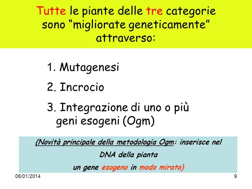 06/01/20149 Tutte le piante delle tre categorie sono migliorate geneticamente attraverso: 1. Mutagenesi 2. Incrocio 3. Integrazione di uno o più geni