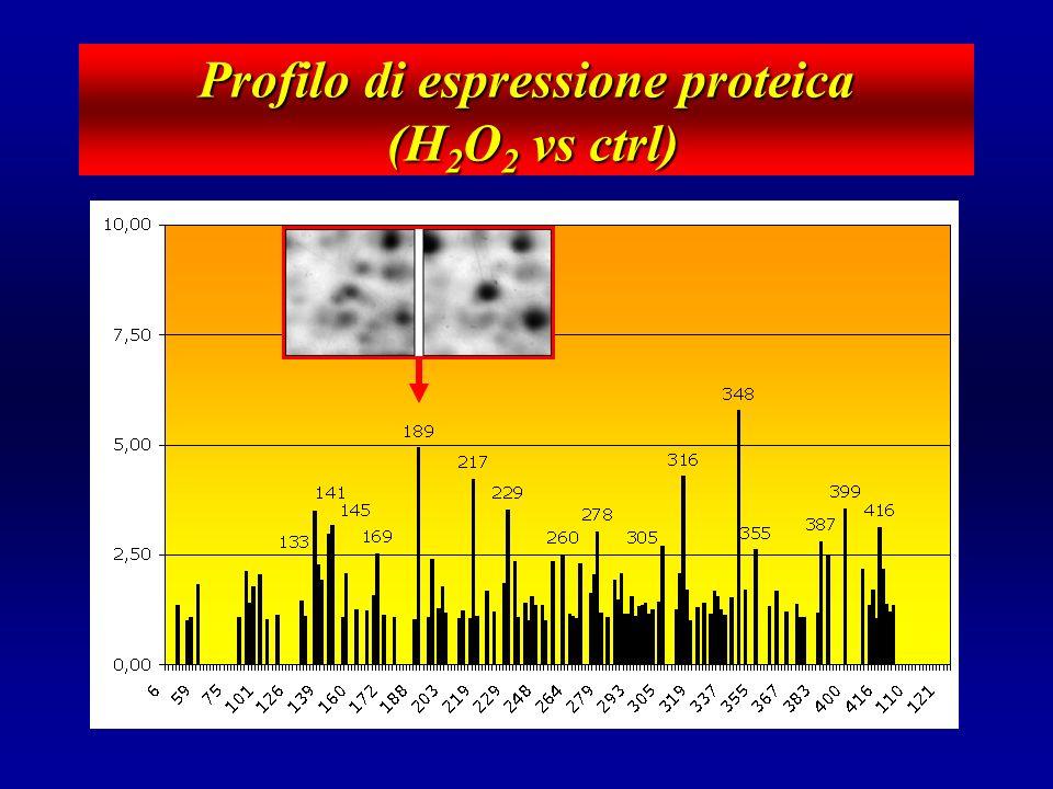 C - Cellule Cristallino 7 cm, 3-10 pH, Ag Maldi - C Identificazione degli spots... 500M H 2 O 2 (10 min) Control