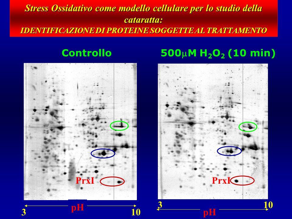 Profilo di espressione proteica (H 2 O 2 vs ctrl)