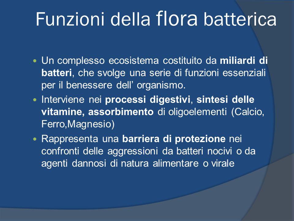 Funzioni della flora batterica Un complesso ecosistema costituito da miliardi di batteri, che svolge una serie di funzioni essenziali per il benessere