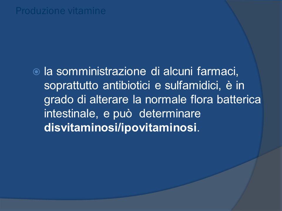 Produzione vitamine la somministrazione di alcuni farmaci, soprattutto antibiotici e sulfamidici, è in grado di alterare la normale flora batterica in