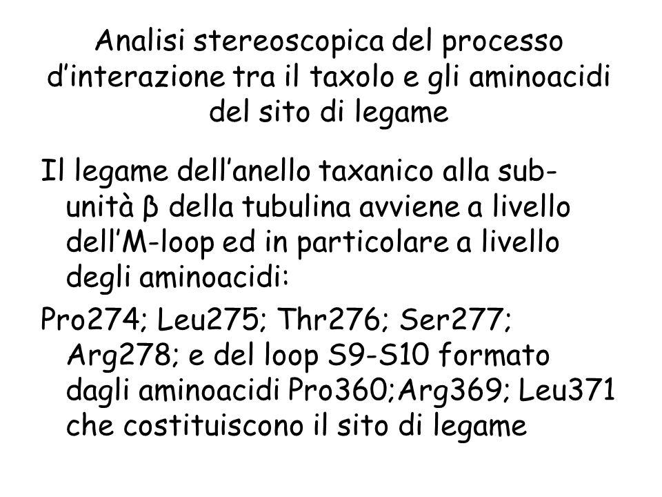 Analisi stereoscopica del processo dinterazione tra il taxolo e gli aminoacidi del sito di legame Il legame dellanello taxanico alla sub- unità β dell