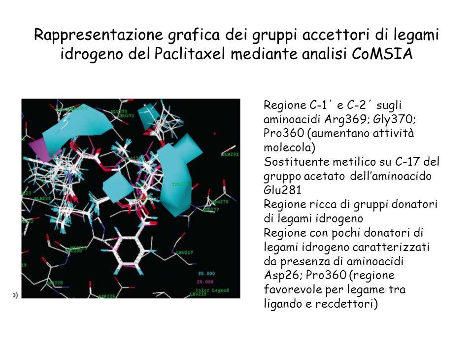 Rappresentazione grafica dei gruppi accettori di legami idrogeno del Paclitaxel mediante analisi CoMSIA Regione C-1΄ e C-2΄ sugli aminoacidi Arg369; G