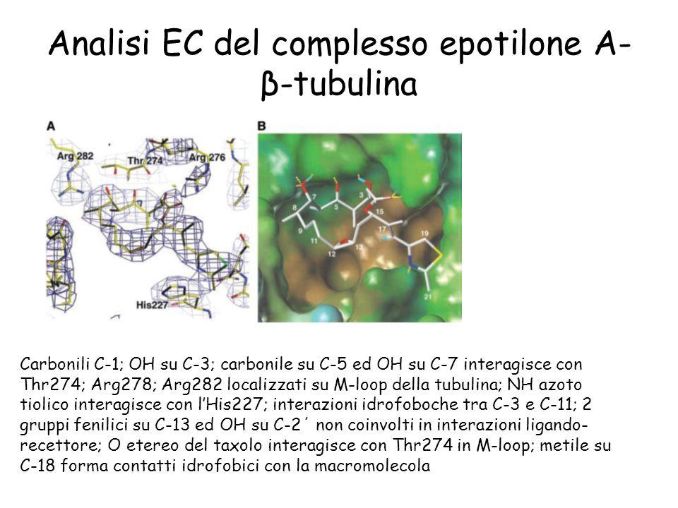Analisi EC del complesso epotilone A- β-tubulina Carbonili C-1; OH su C-3; carbonile su C-5 ed OH su C-7 interagisce con Thr274; Arg278; Arg282 locali