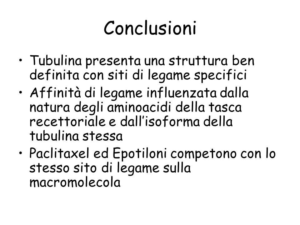 Conclusioni Tubulina presenta una struttura ben definita con siti di legame specifici Affinità di legame influenzata dalla natura degli aminoacidi del