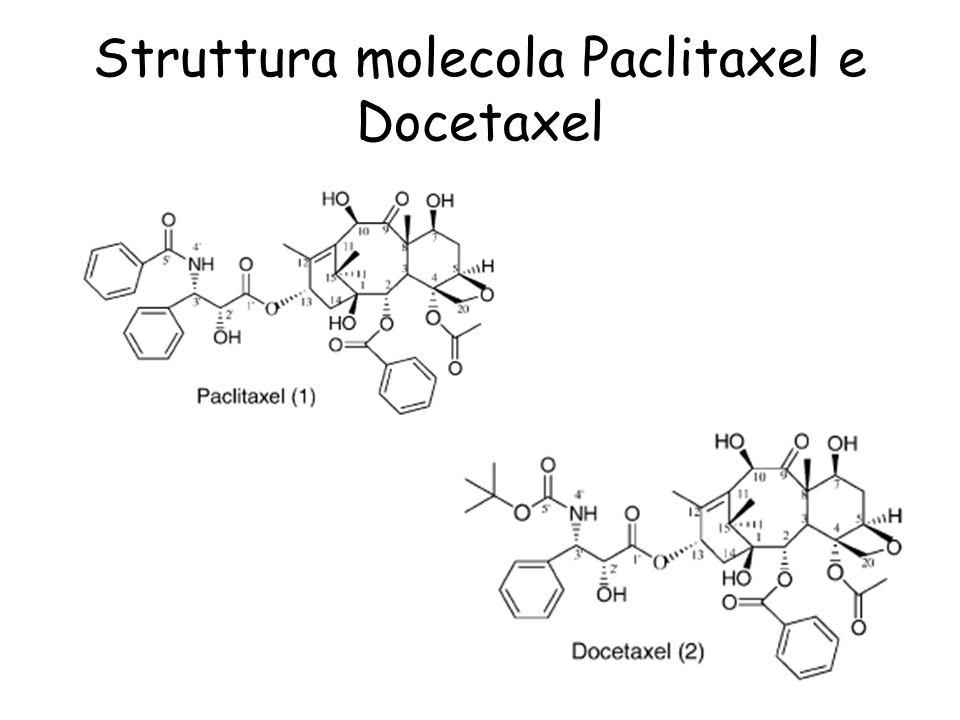 Struttura del Paclitaxel Rappresentazione grafica della molecola di Paclitaxel inserita nel sito di legame allinterno della struttura recettoriale nella macromolecola tubulina