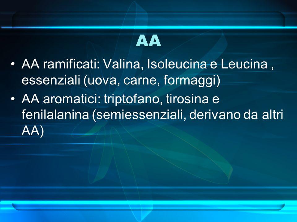 AA AA ramificati: Valina, Isoleucina e Leucina, essenziali (uova, carne, formaggi) AA aromatici: triptofano, tirosina e fenilalanina (semiessenziali,