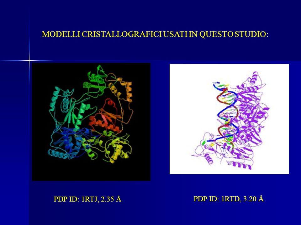 MODELLI CRISTALLOGRAFICI USATI IN QUESTO STUDIO: PDP ID: 1RTJ, 2.35 Ǻ PDP ID: 1RTD, 3.20 Ǻ