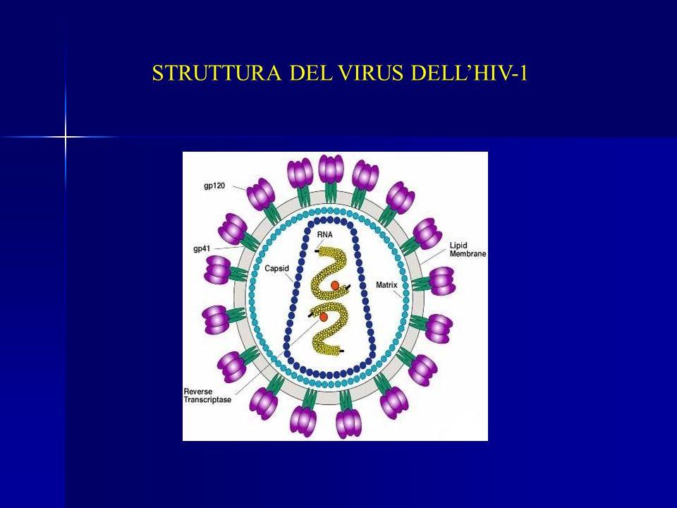 STRUTTURA DEL VIRUS DELLHIV-1