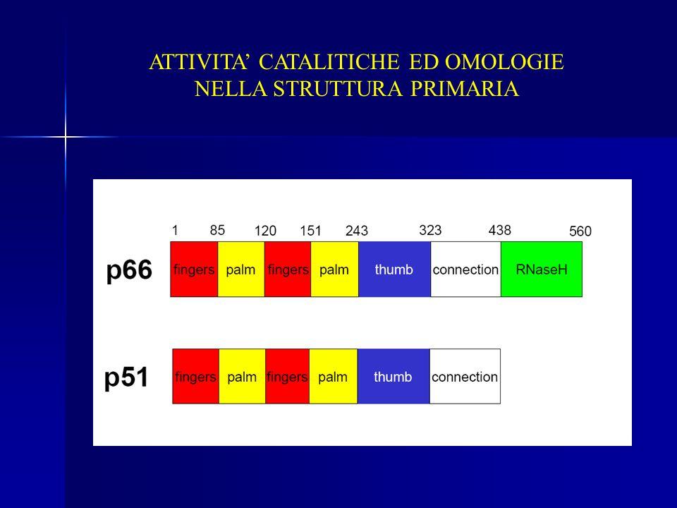 ATTIVITA CATALITICHE ED OMOLOGIE NELLA STRUTTURA PRIMARIA
