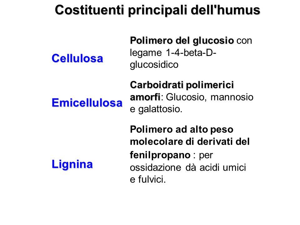 Costituenti principali dell'humus Cellulosa Polimero del glucosio Polimero del glucosio con legame 1-4-beta-D- glucosidico Emicellulosa Carboidrati po