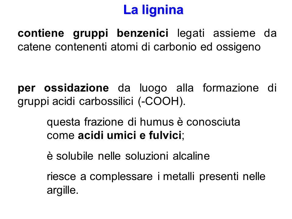 La lignina contiene gruppi benzenici legati assieme da catene contenenti atomi di carbonio ed ossigeno per ossidazione da luogo alla formazione di gru