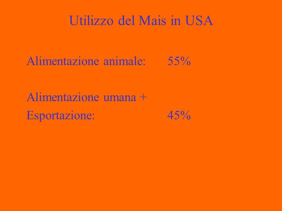 Utilizzo del Mais in USA Alimentazione animale: 55% Alimentazione umana + Esportazione:45%