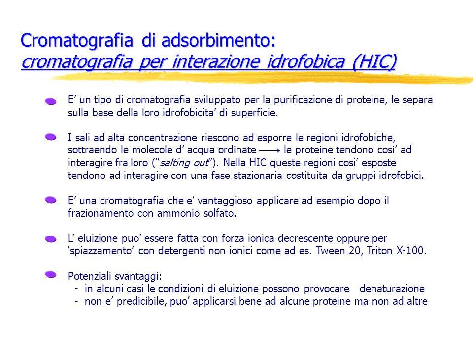 Cromatografia di adsorbimento: cromatografia per interazione idrofobica (HIC) E un tipo di cromatografia sviluppato per la purificazione di proteine,
