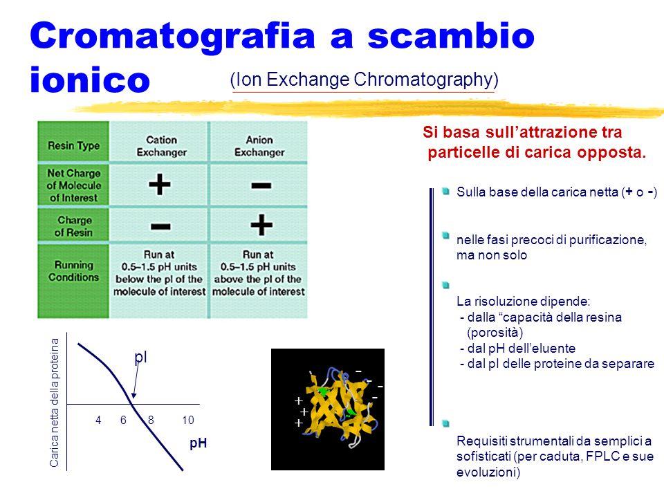 Cromatografia a scambio ionico Si basa sullattrazione tra particelle di carica opposta. (Ion Exchange Chromatography) pI 4 6 8 10 pH Carica netta dell