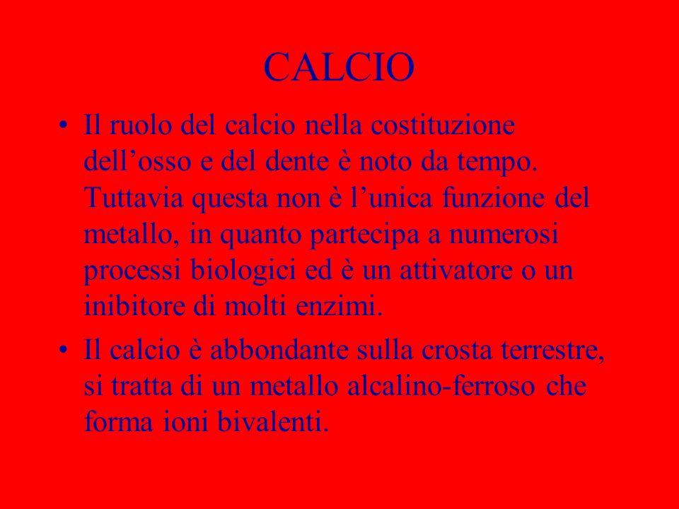 CALCIO Il ruolo del calcio nella costituzione dellosso e del dente è noto da tempo. Tuttavia questa non è lunica funzione del metallo, in quanto parte