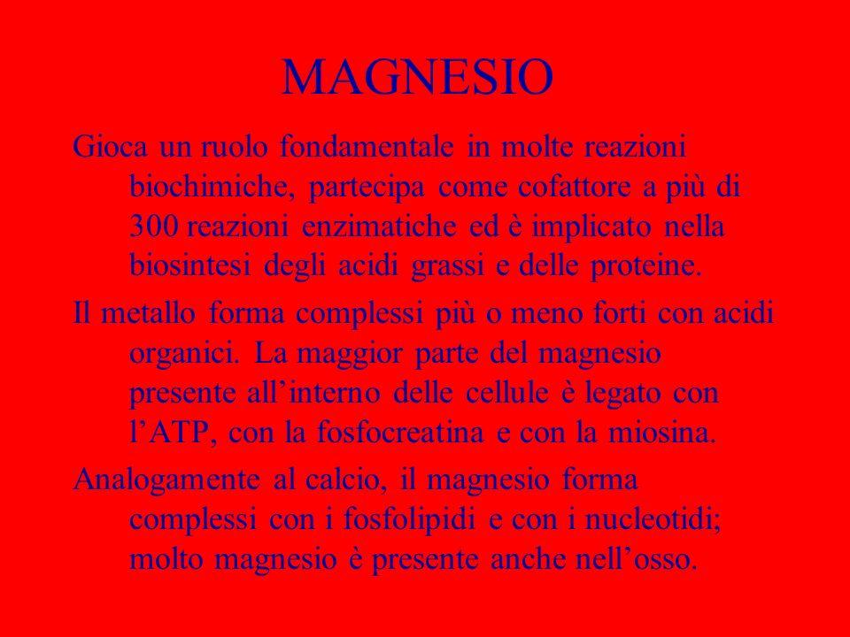 ASSUNZIONE DI MAGNESIO Il magnesio è contenuto in molti cibi, e per questa ragione è rara una carenza di origine alimentare.