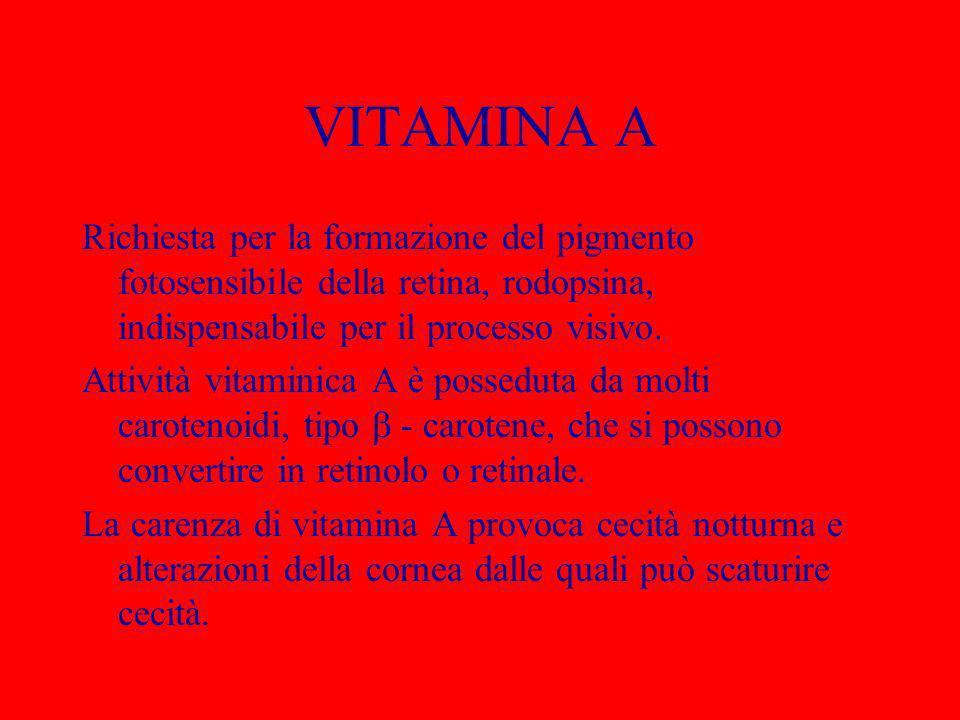 VITAMINA A Richiesta per la formazione del pigmento fotosensibile della retina, rodopsina, indispensabile per il processo visivo. Attività vitaminica