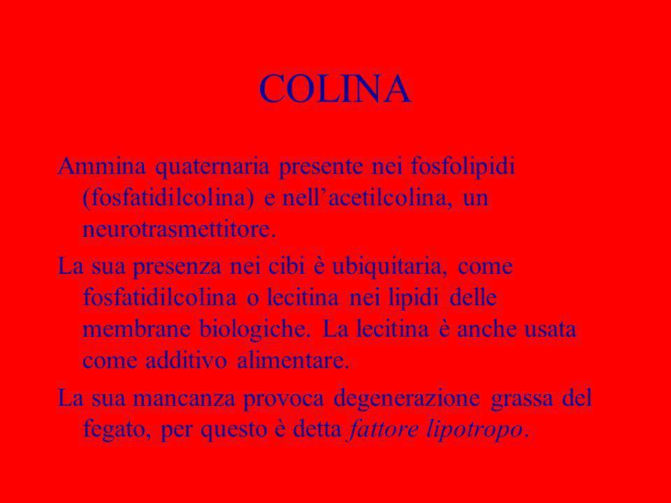COLINA Ammina quaternaria presente nei fosfolipidi (fosfatidilcolina) e nellacetilcolina, un neurotrasmettitore. La sua presenza nei cibi è ubiquitari