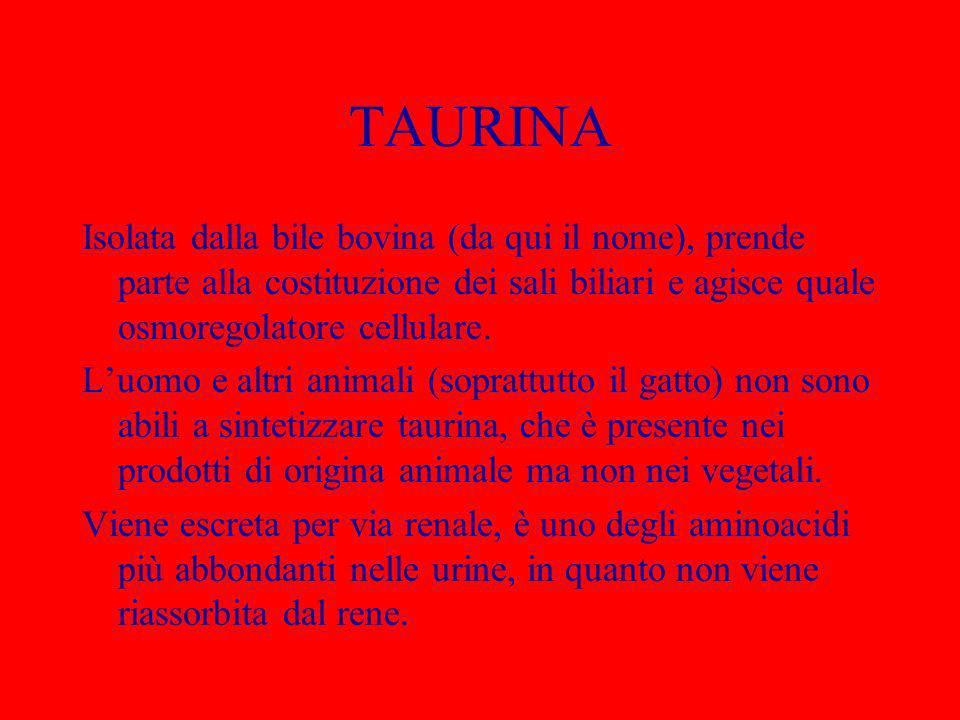 TAURINA Isolata dalla bile bovina (da qui il nome), prende parte alla costituzione dei sali biliari e agisce quale osmoregolatore cellulare. Luomo e a