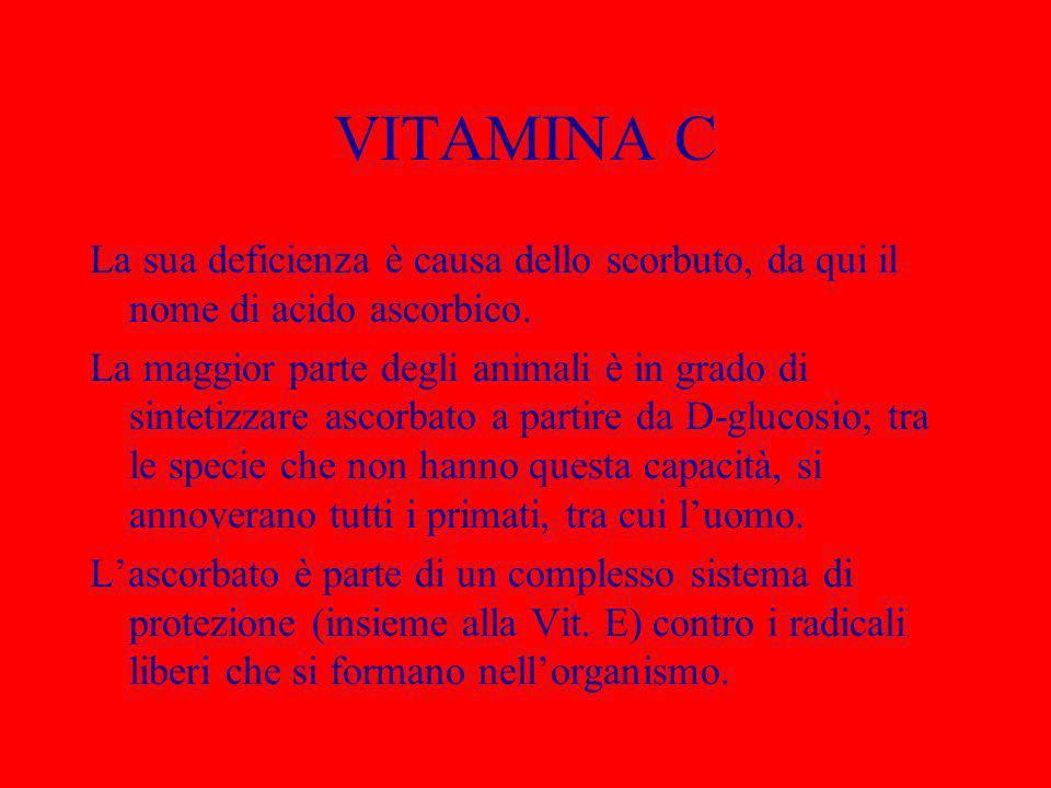 BIOTINA – Vitamina H Vitamina idrosolubile individuata nel 1942.