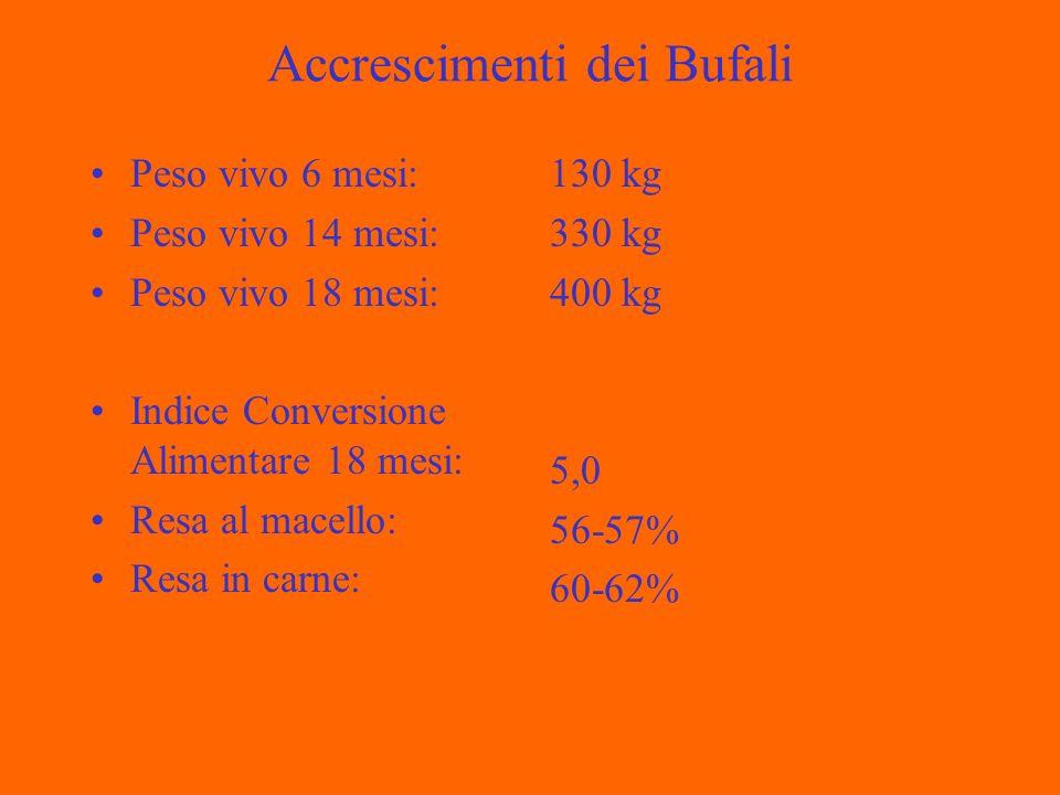 Accrescimenti dei Bufali Peso vivo 6 mesi: Peso vivo 14 mesi: Peso vivo 18 mesi: Indice Conversione Alimentare 18 mesi: Resa al macello: Resa in carne: 130 kg 330 kg 400 kg 5,0 56-57% 60-62%