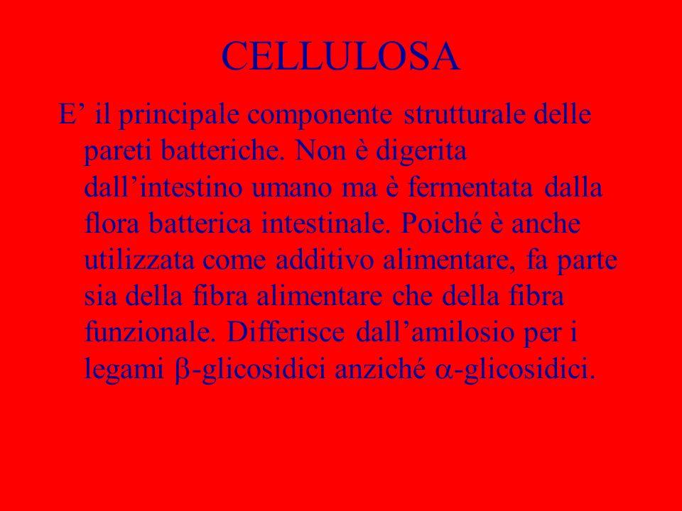 CELLULOSA E il principale componente strutturale delle pareti batteriche. Non è digerita dallintestino umano ma è fermentata dalla flora batterica int