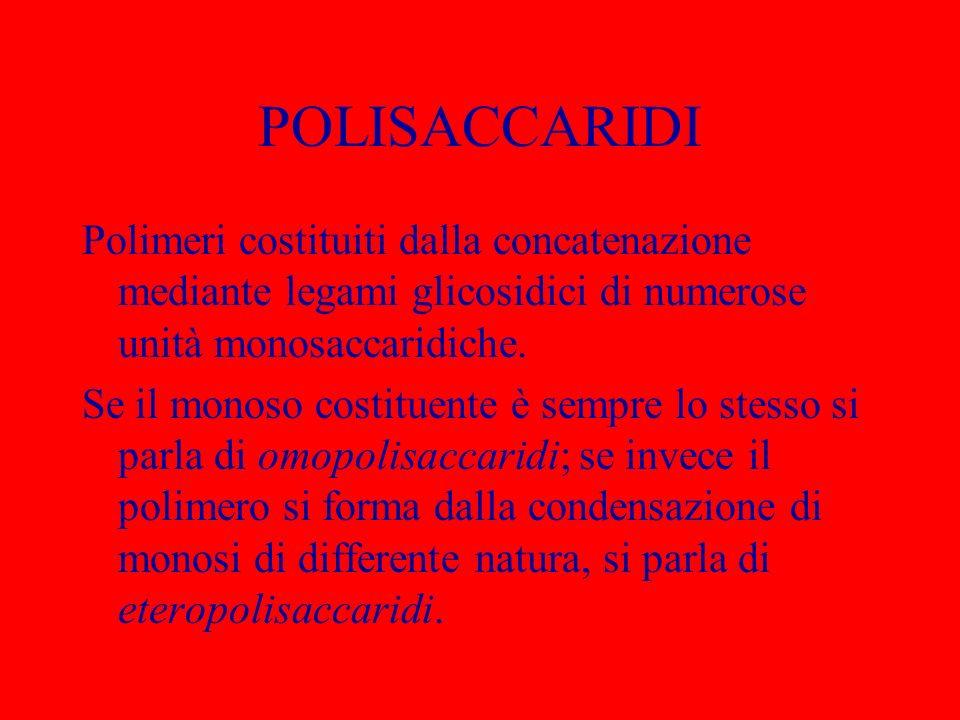 POLISACCARIDI Polimeri costituiti dalla concatenazione mediante legami glicosidici di numerose unità monosaccaridiche. Se il monoso costituente è semp