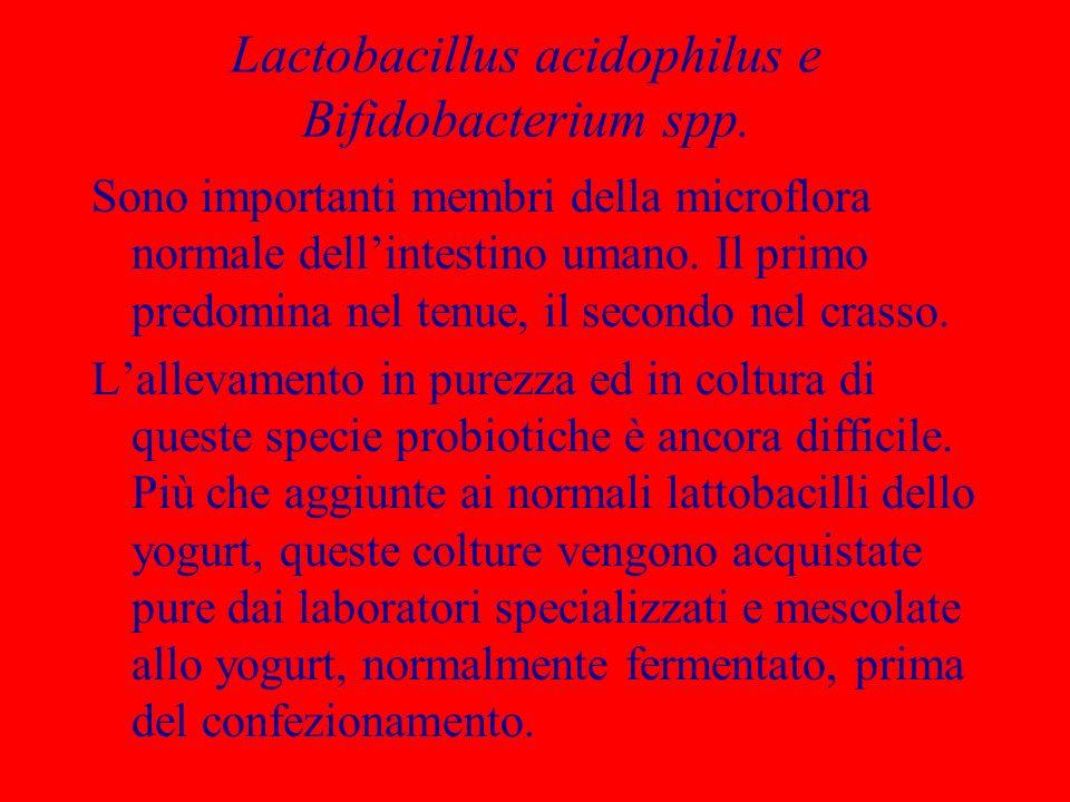 Lactobacillus acidophilus e Bifidobacterium spp. Sono importanti membri della microflora normale dellintestino umano. Il primo predomina nel tenue, il