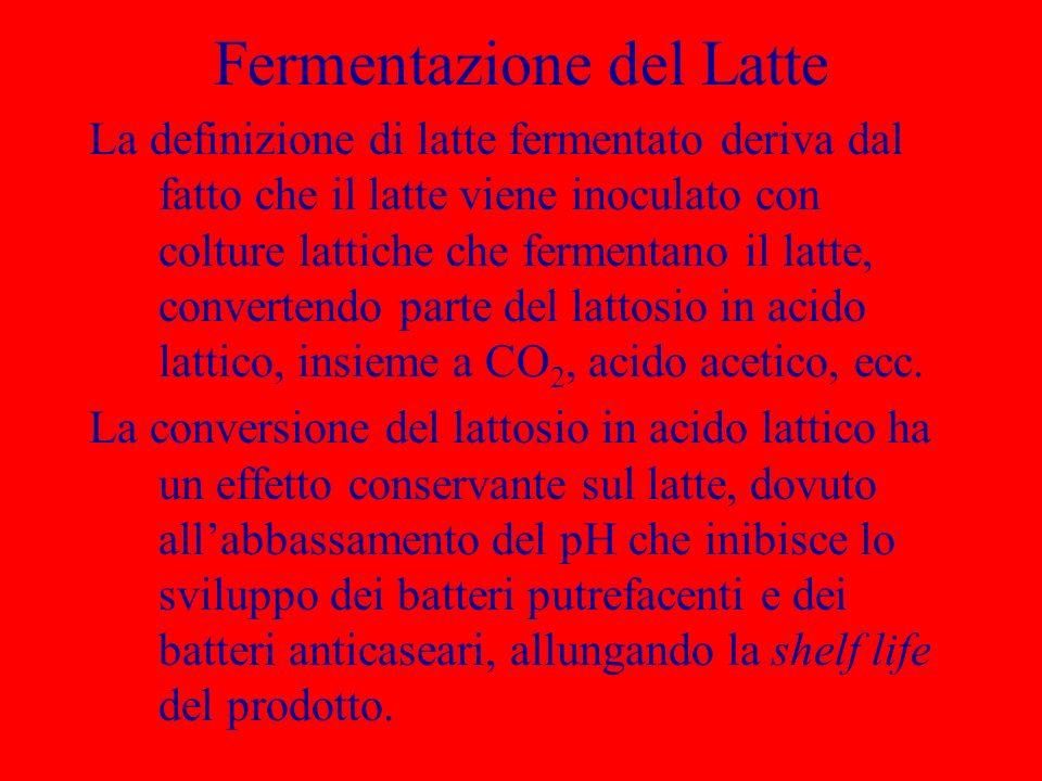 Fermentazione del Latte La definizione di latte fermentato deriva dal fatto che il latte viene inoculato con colture lattiche che fermentano il latte,