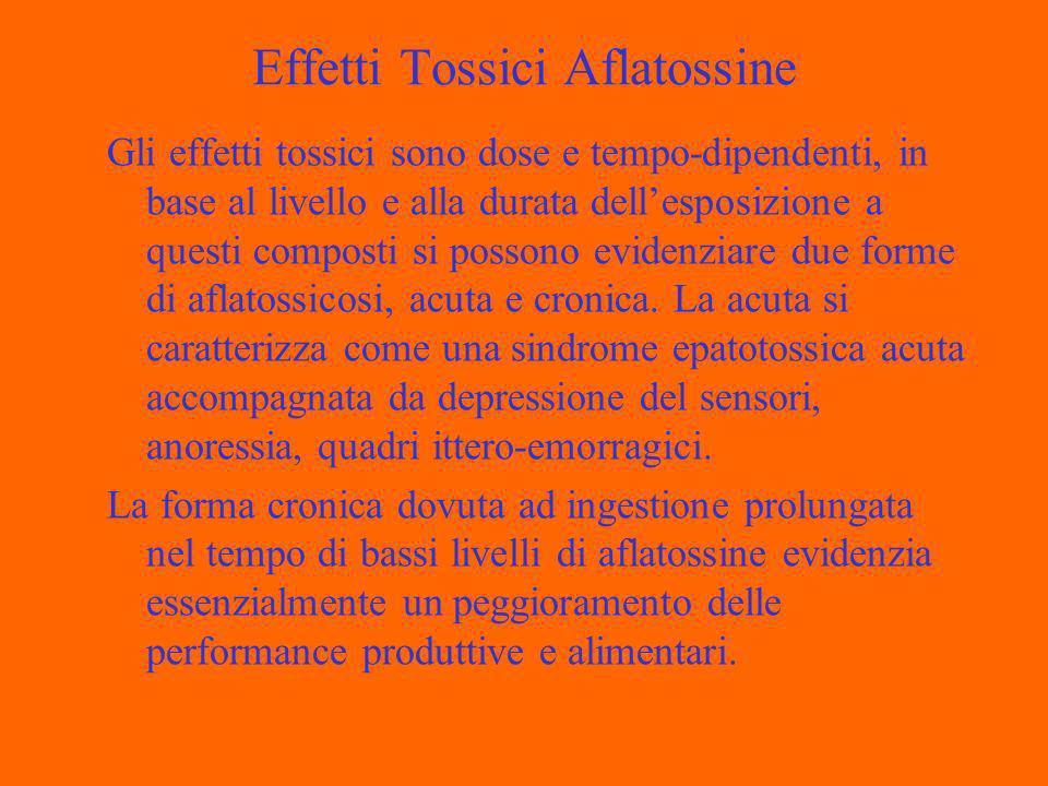 Effetti Tossici Aflatossine Gli effetti tossici sono dose e tempo-dipendenti, in base al livello e alla durata dellesposizione a questi composti si possono evidenziare due forme di aflatossicosi, acuta e cronica.
