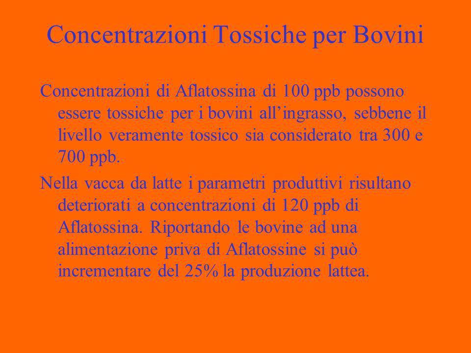 Concentrazioni Tossiche per Bovini Concentrazioni di Aflatossina di 100 ppb possono essere tossiche per i bovini allingrasso, sebbene il livello veramente tossico sia considerato tra 300 e 700 ppb.