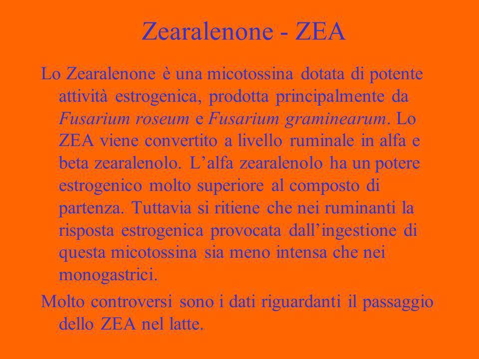 Zearalenone - ZEA Lo Zearalenone è una micotossina dotata di potente attività estrogenica, prodotta principalmente da Fusarium roseum e Fusarium graminearum.
