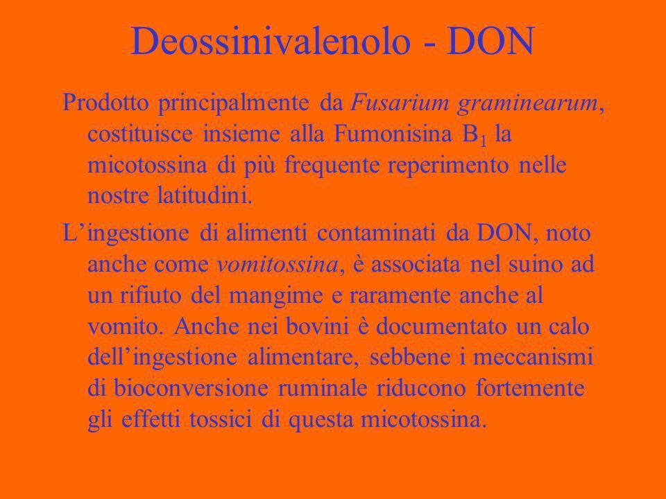 Deossinivalenolo - DON Prodotto principalmente da Fusarium graminearum, costituisce insieme alla Fumonisina B 1 la micotossina di più frequente reperimento nelle nostre latitudini.