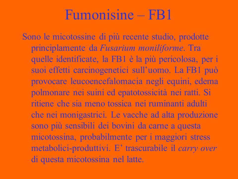 Fumonisine – FB1 Sono le micotossine di più recente studio, prodotte principlamente da Fusarium moniliforme.