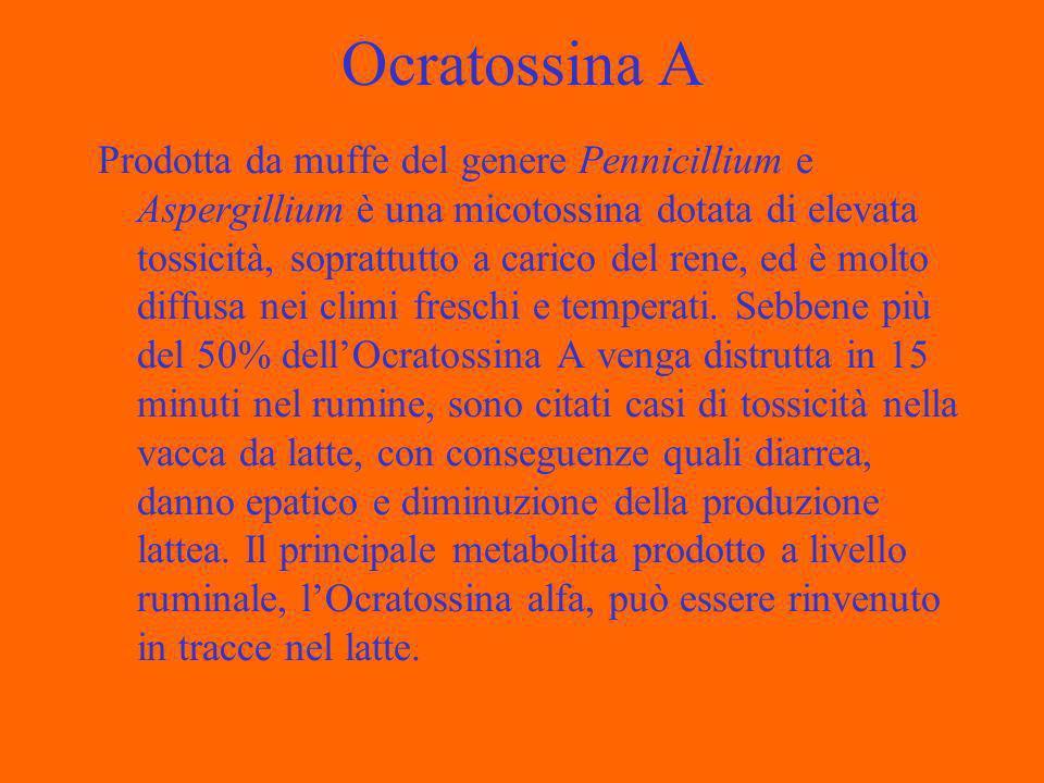 Ocratossina A Prodotta da muffe del genere Pennicillium e Aspergillium è una micotossina dotata di elevata tossicità, soprattutto a carico del rene, ed è molto diffusa nei climi freschi e temperati.