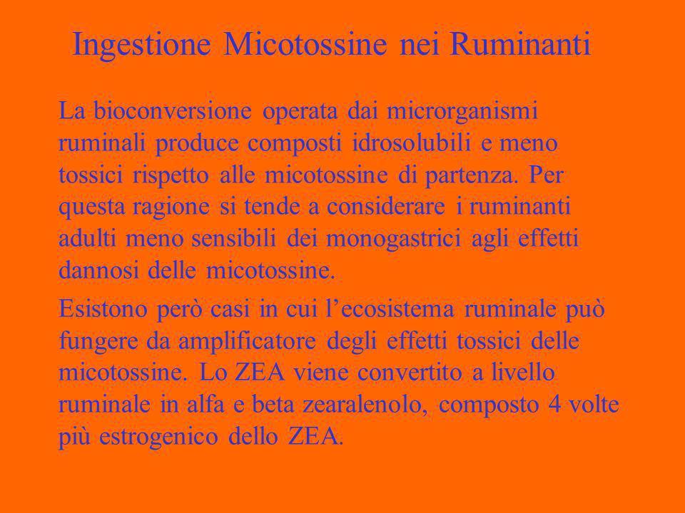 Ingestione Micotossine nei Ruminanti La bioconversione operata dai microrganismi ruminali produce composti idrosolubili e meno tossici rispetto alle micotossine di partenza.