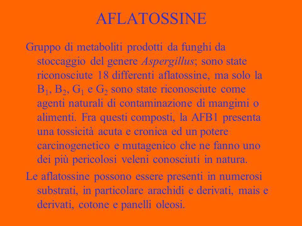 AFLATOSSINE Gruppo di metaboliti prodotti da funghi da stoccaggio del genere Aspergillus; sono state riconosciute 18 differenti aflatossine, ma solo la B 1, B 2, G 1 e G 2 sono state riconosciute come agenti naturali di contaminazione di mangimi o alimenti.