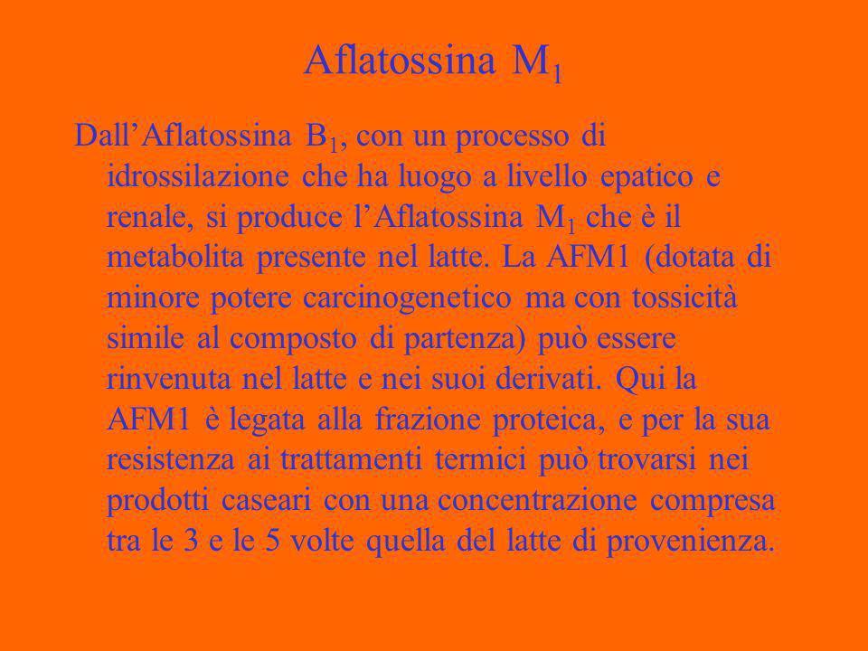 Aflatossina M 1 DallAflatossina B 1, con un processo di idrossilazione che ha luogo a livello epatico e renale, si produce lAflatossina M 1 che è il metabolita presente nel latte.