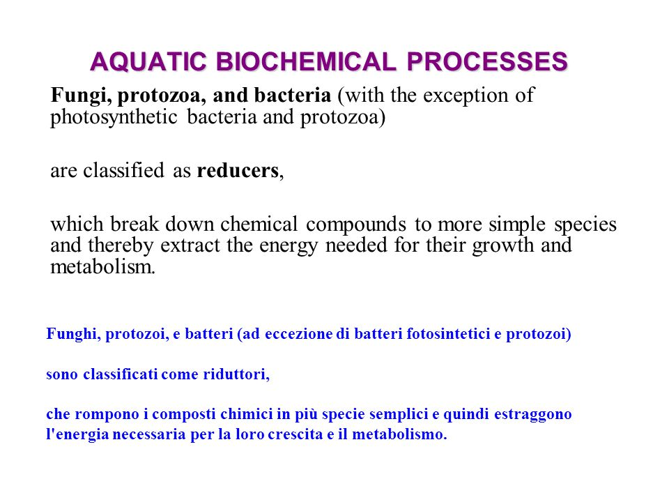 AQUATIC BIOCHEMICAL PROCESSES Fungi, protozoa, and bacteria (with the exception of photosynthetic bacteria and protozoa) are classified as reducers, which break down chemical compounds to more simple species and thereby extract the energy needed for their growth and metabolism.
