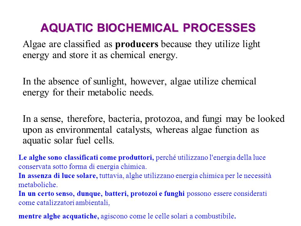 AQUATIC BIOCHEMICAL PROCESSES Algae are classified as producers because they utilize light energy and store it as chemical energy. In the absence of s
