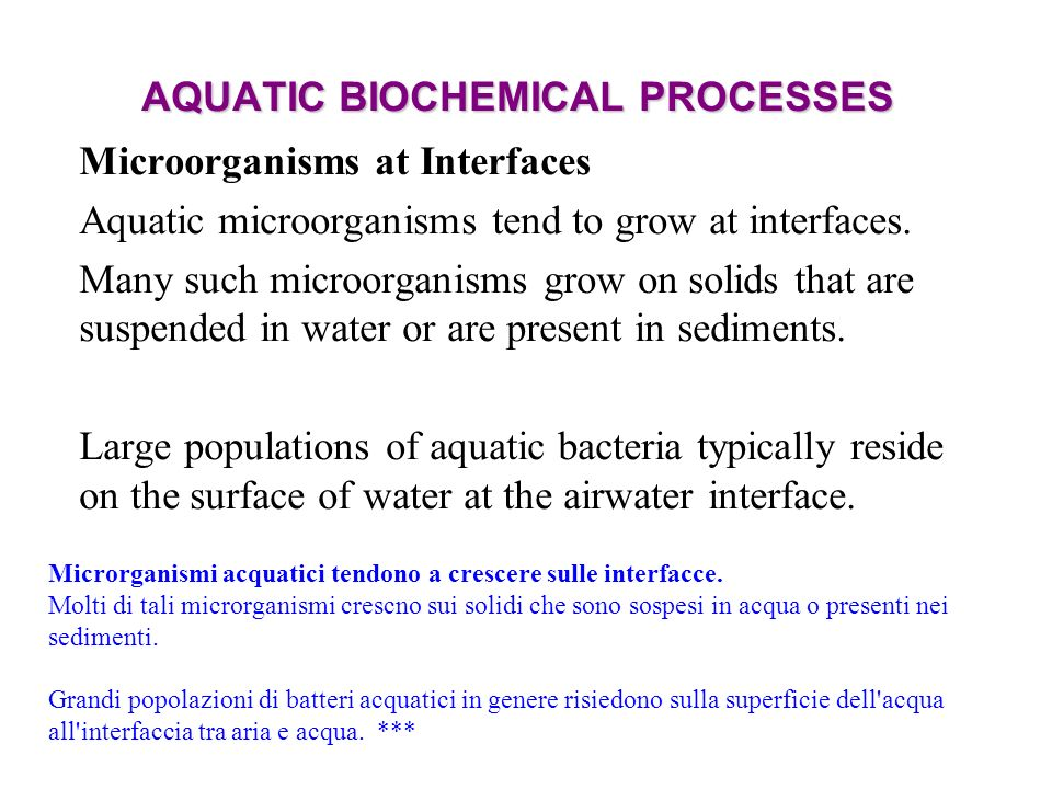 AQUATIC BIOCHEMICAL PROCESSES Microorganisms at Interfaces Aquatic microorganisms tend to grow at interfaces.