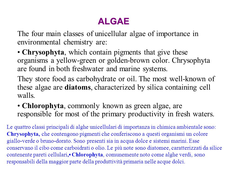 ALGAE The four main classes of unicellular algae of importance in environmental chemistry are: Chrysophyta, which contain pigments that give these org