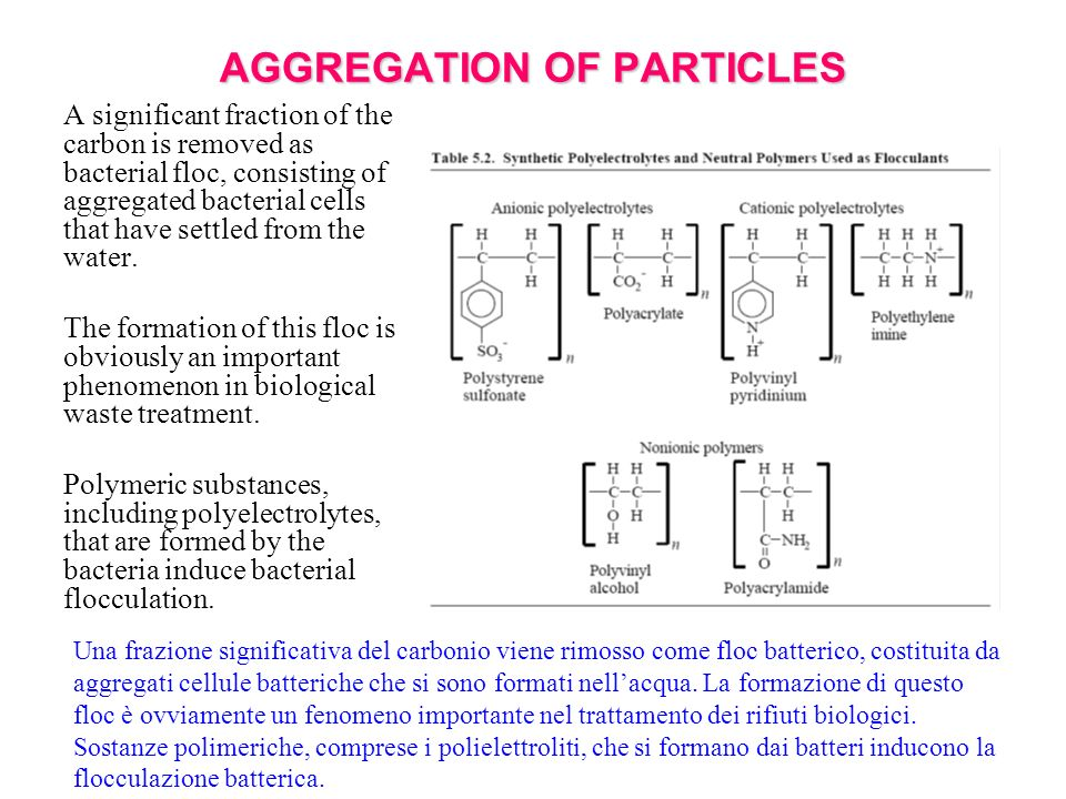 AGGREGATION OF PARTICLES A significant fraction of the carbon is removed as bacterial floc, consisting of aggregated bacterial cells that have settled from the water.