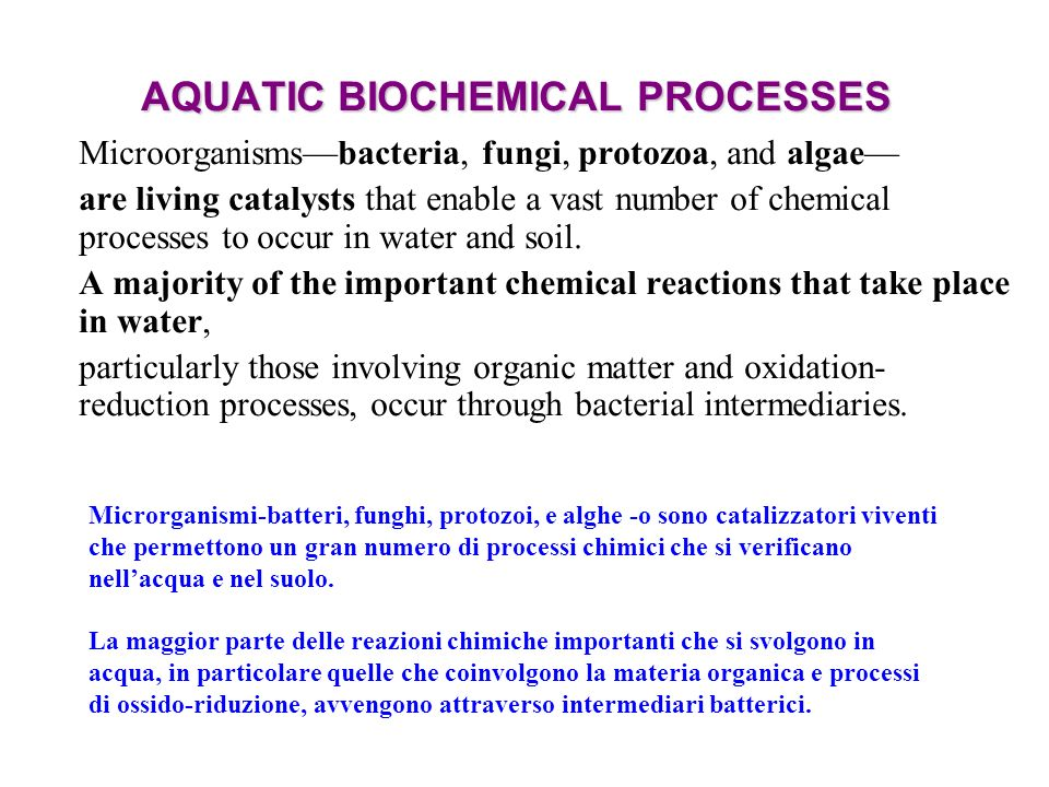 AQUATIC BIOCHEMICAL PROCESSES Microorganismsbacteria, fungi, protozoa, and algae are living catalysts that enable a vast number of chemical processes to occur in water and soil.