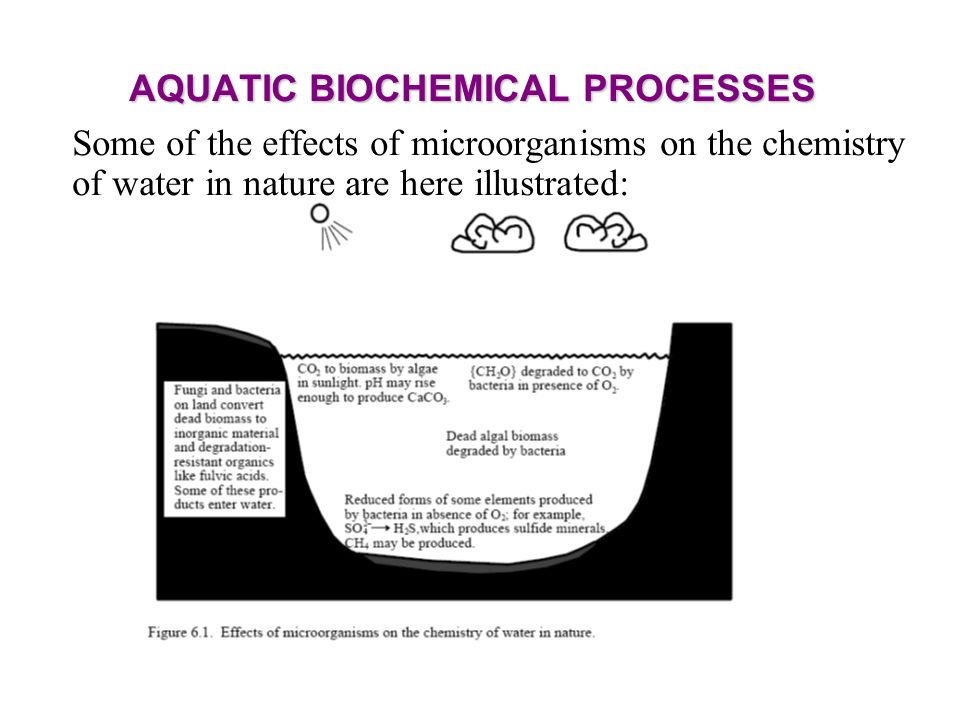 AQUATIC BIOCHEMICAL PROCESSES Some of the effects of microorganisms on the chemistry of water in nature are here illustrated: