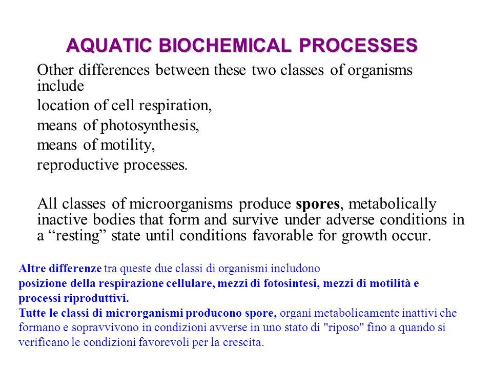 AQUATIC BIOCHEMICAL PROCESSES Other differences between these two classes of organisms include location of cell respiration, means of photosynthesis, means of motility, reproductive processes.